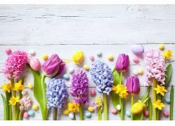 华美,花卉,植物645716