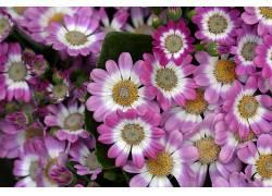 华美,花卉,植物646632