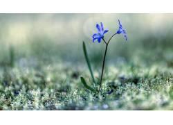 植物,草,宏,花卉,蓝色的花朵470889
