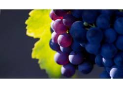 景深,葡萄,水果,植物54281