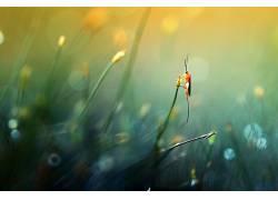 摄影,壁纸,宏,植物,树叶,背景虚化,黄色的花朵,昆虫,休息407425