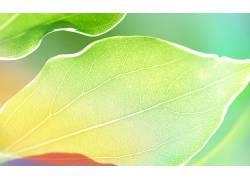 摄影,植物,绿色,树叶,宏325663