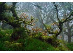植物,草,树木,苔藓286881
