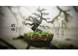 盆栽,树木,数字艺术,植物,壁纸108320图片