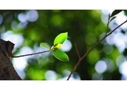 木,壁纸,树叶,科,植物178200