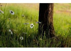 植物,草,花卉,树木396435