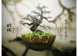 盆栽,植物,活版印刷,数字艺术,树木,日本16263图片