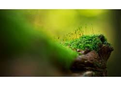 木,宏,苔藓,壁纸,背景虚化,特写,绿色,植物9049