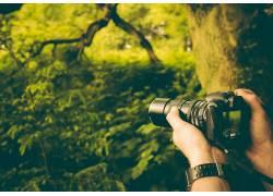相机,景深,森林,手,植物443206图片