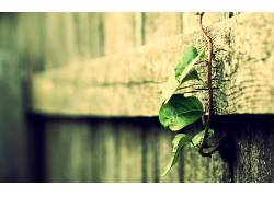 木,宏,过滤,景深,植物,藤,树叶,酿酒164929图片