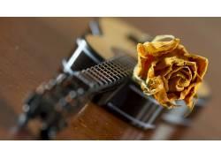 吉他,玫瑰,特写,模糊,景深,花卉,背景虚化,乐器139145