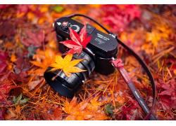 相机,树叶,植物,秋季579118