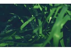 摄影,绿色,壁纸,植物,草,景深325958图片