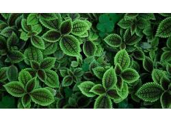摄影,绿色,植物,树叶503817