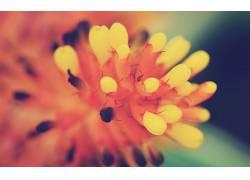 植物,宏,黄色的花朵,花卉56286