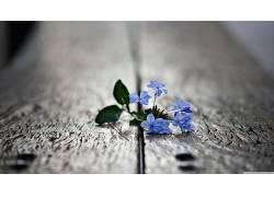 木表面,花卉,宏,景深,蓝色的花朵108869