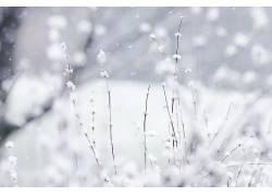 摄影,壁纸,景深,植物,雪,冬季,科322541图片