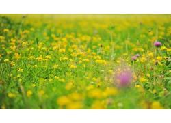 植物,草464999