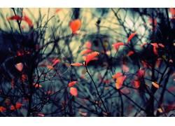 秋季,壁纸,树枝,树叶,植物108878