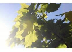 摄影,壁纸,树叶,植物,科,太阳319567图片