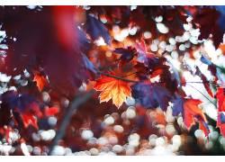 秋季,树叶,太阳,树木,华美,阳光,植物,背景虚化601528