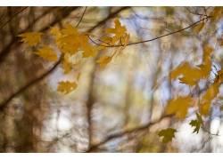 秋季,树叶,树木,植物,壁纸573258