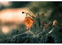 秋季,树叶,植物,宏,壁纸564972