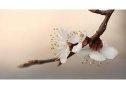 摄影,花卉,宏,白色376323