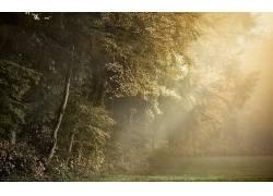 摄影,壁纸,树木,植物,太阳光线,森林清理315510