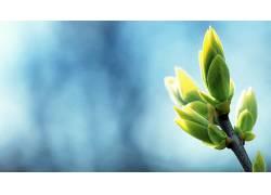 植物,蓝色背景,背景虚化,树叶,壁纸178198