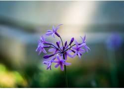 摄影,花卉,宏,紫色的花朵,阳光384002