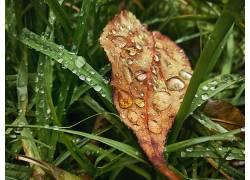 秋季,树叶,植物,水滴575278