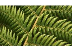 植物,蕨类植物,宏,壁纸355337