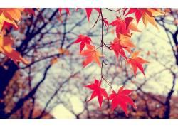 秋季,树叶,模糊,地球,植物,树木15769