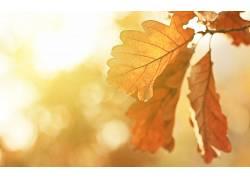 秋季,树叶,橡木,阳光,植物17754