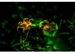 摄影,花卉,树叶,绿色,阳光,黄色的花朵,宏383525