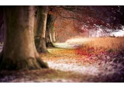 摄影,壁纸,树木,植物,科,秋季319108