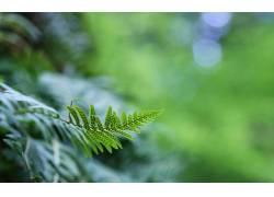植物,蕨类植物,景深70148