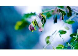 树叶,植物,壁纸,景深242953