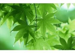 摄影,壁纸,植物,树叶,绿色,景深,水滴330485图片