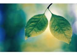 树叶,植物,壁纸,特写42670图片