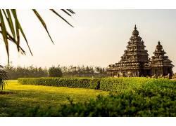 寺庙,草,印度,植物,树木,花园410352图片