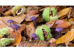 紫色,棕色,绿色,壁纸,植物,树叶,蘑菇,华美567569