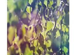 树叶,植物,壁纸,过滤,背景虚化,宏,景深,阳光260308图片