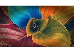 数字艺术,植物,树叶,华美169344图片