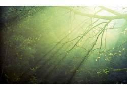 摄影,壁纸,植物,树木,科,太阳光线323624