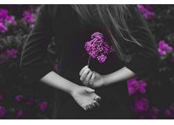 紫色,花卉,选择性着色,妇女,手420677