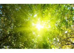 摄影,壁纸,植物,树木,阳光,科326848图片