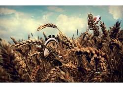 植物,小麦,数字艺术,给予164104