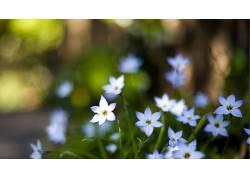 摄影,花卉,植物,景深,背景虚化,壁纸663680